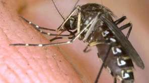 An undated file photo of a mosquito.