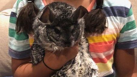 Kidsday reporter Mattea Rajah-Mandery's pet chinchilla, Bones.