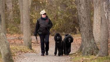 Susan Evangelista of North Babylon walks her dogs,