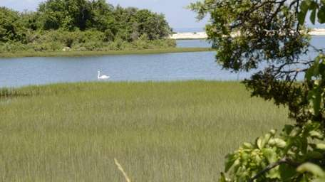 A view of Dam Pond Maritime Reserve in