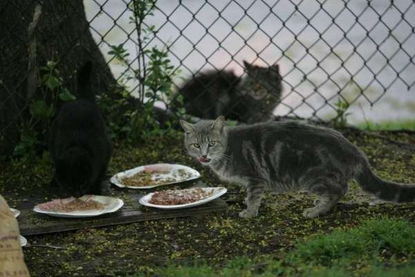 Feral cats live in a vacant lot off