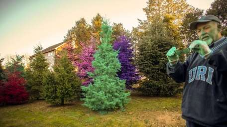 Painted Christmas trees are sold alongside traditional Frasier