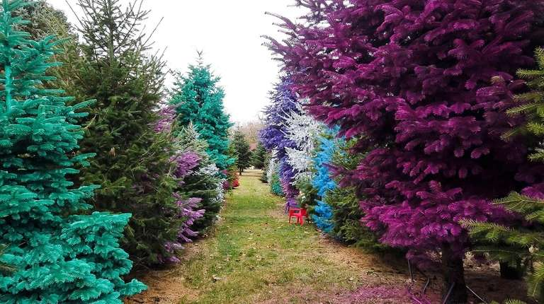 Painted trees at Dart's Christmas Tree Farm in