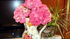 The bright color of hydrangea blooms can be