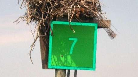 An osprey nest has made its home on