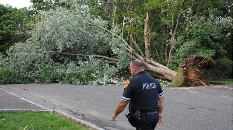A police officer walks past a downed tree