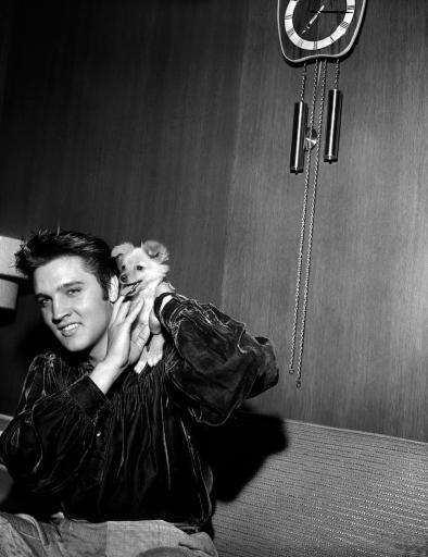 Elvis Presley plays with his puppy Sweet Pea