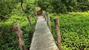 A wooden boardwalk carries visitors over a wetlands