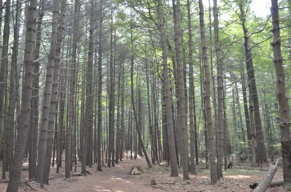 Prosser Pines County Park in Middle Island is
