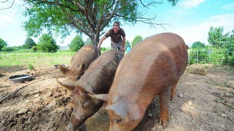 Tom Hart at his farm in Orient. Despite