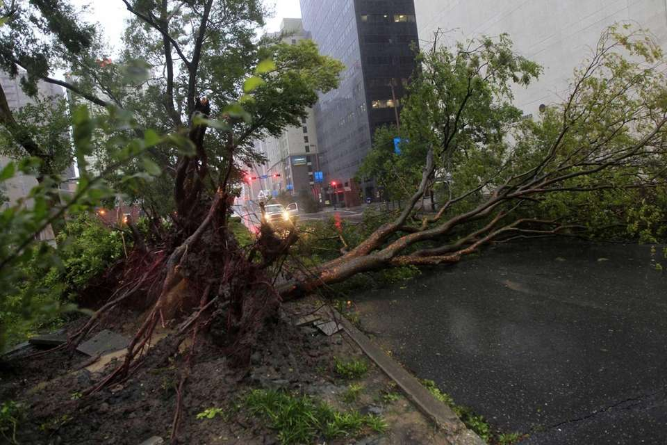 An uprooted tree lies across Poydras Street in