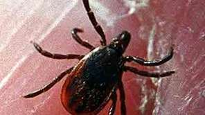 Lyme disease affects a human?s body in stages,