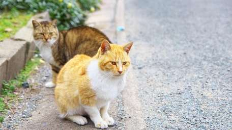 Feral cats rely on kind-hearted humans to help