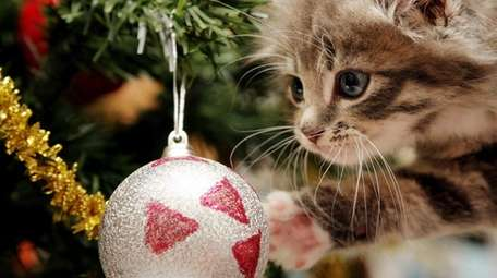 A cat near a Christmas ornament.