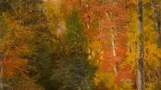"""Thomas Moran's """"The Woods in Autumn"""" is an"""