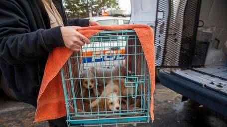 Nine puppies were seized in Hicksville Wednesday as