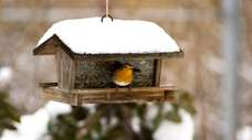 Check bird feeders often; clean and restock seed