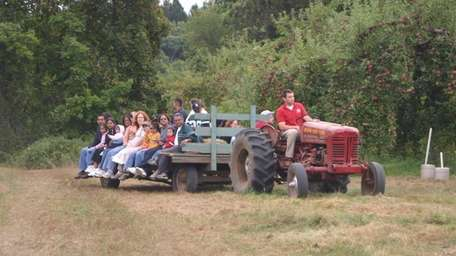 Guests at Wilkens Fruit & Fir Farm in