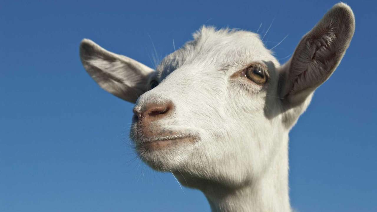 Wheary: Beatrice Biira shows we can address poverty goat by goat ...