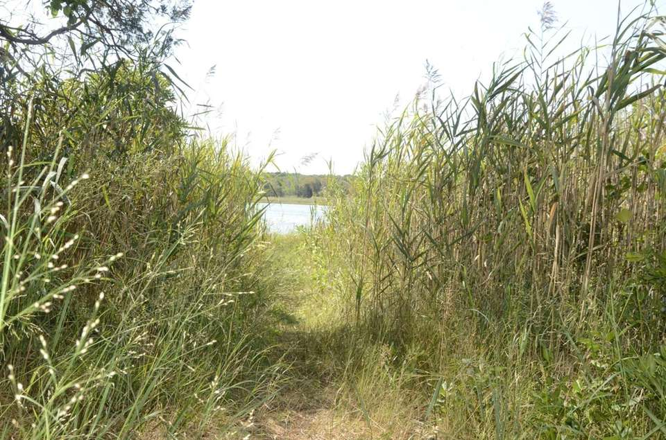 A grassy trail leads to the waterfront at