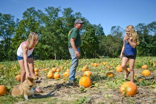 Jim Stakey, owner of Stakey's Pumpkin Farm, with
