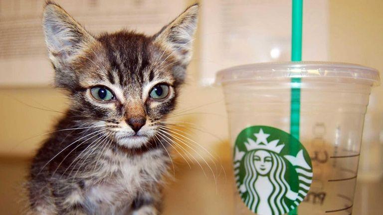Little Big Burger, a runt kitten with the