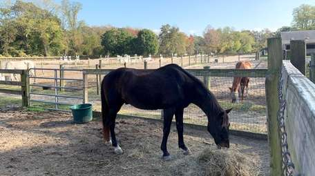 Brown Pony, forefront, is Laura Emert's lesson horse,