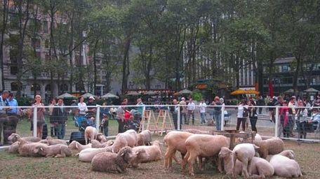 Sheep at Bryant Park