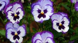 Replace annuals with pansies. They'll bloom all fall