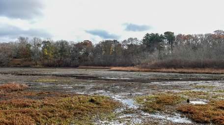 Lily Lake in Yaphank is overrun with invasive