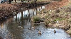A lush stretch of Motts Creek where