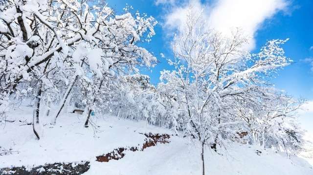 Trees covered with snow in winter mountains.