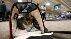 Oscar the cat sits in his carry on