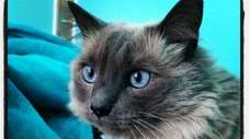 This is Patrick Calabria's cat, Kitty, who passed