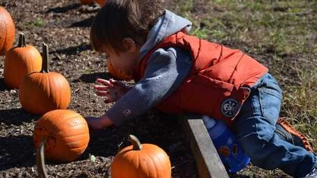 Felix Ruderman, 1, of Sea Cliff, searches for