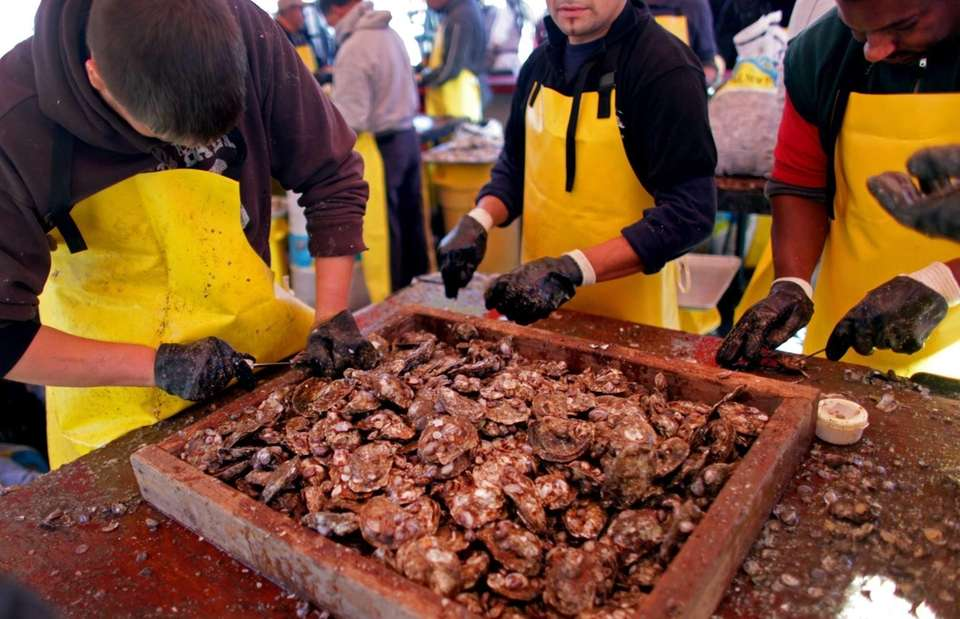 Oysters are shucked at the festival in Oyster