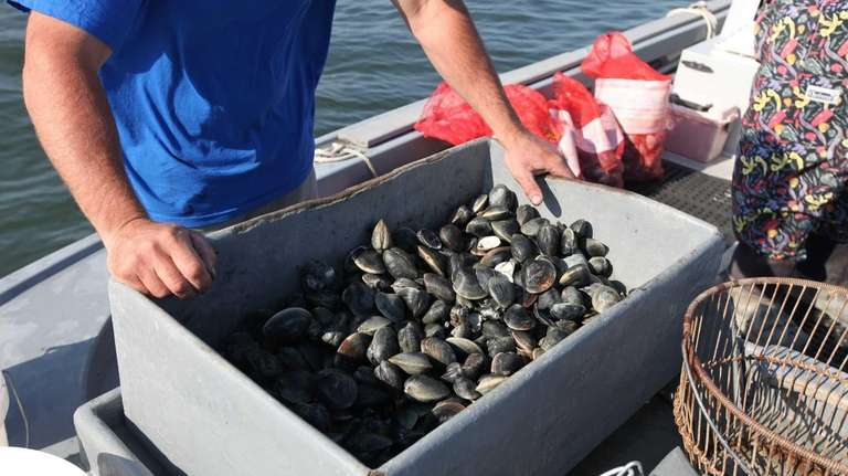 Clams caught by fishermen Bill Painter and Bill