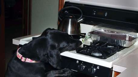 Five-year-old, lab-basset hound mix Lucy reaches for a