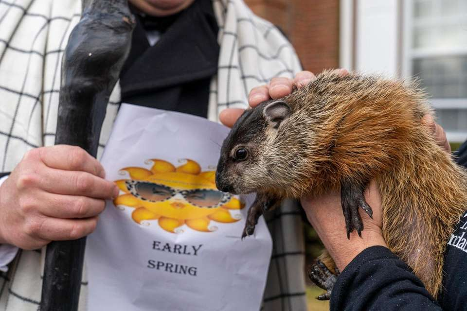 """Quigley"" the groundhog from STAR Foundation in Middle"