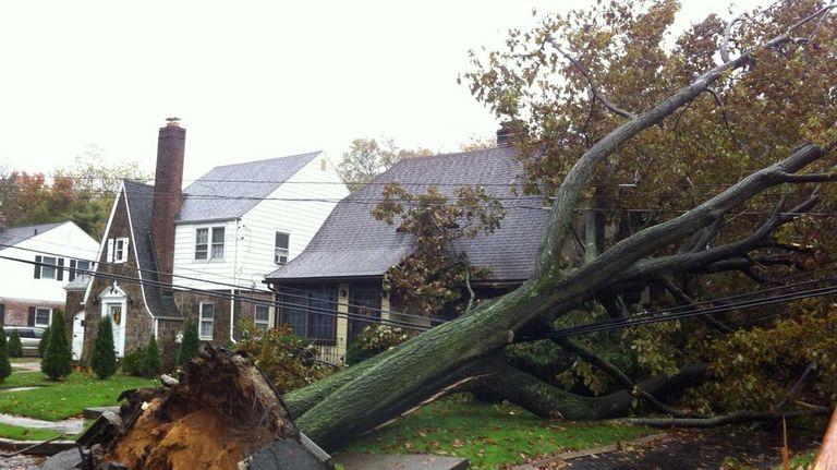A tree fell on a house on Harvard