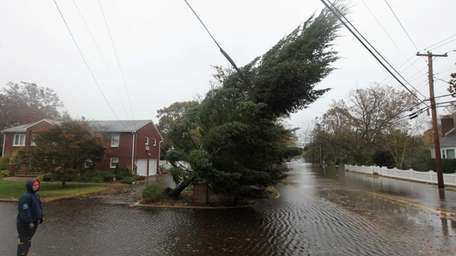 A large tree dangerously rests on power lines