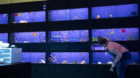 Jessica Wallert cleans the fish tanks at Pet