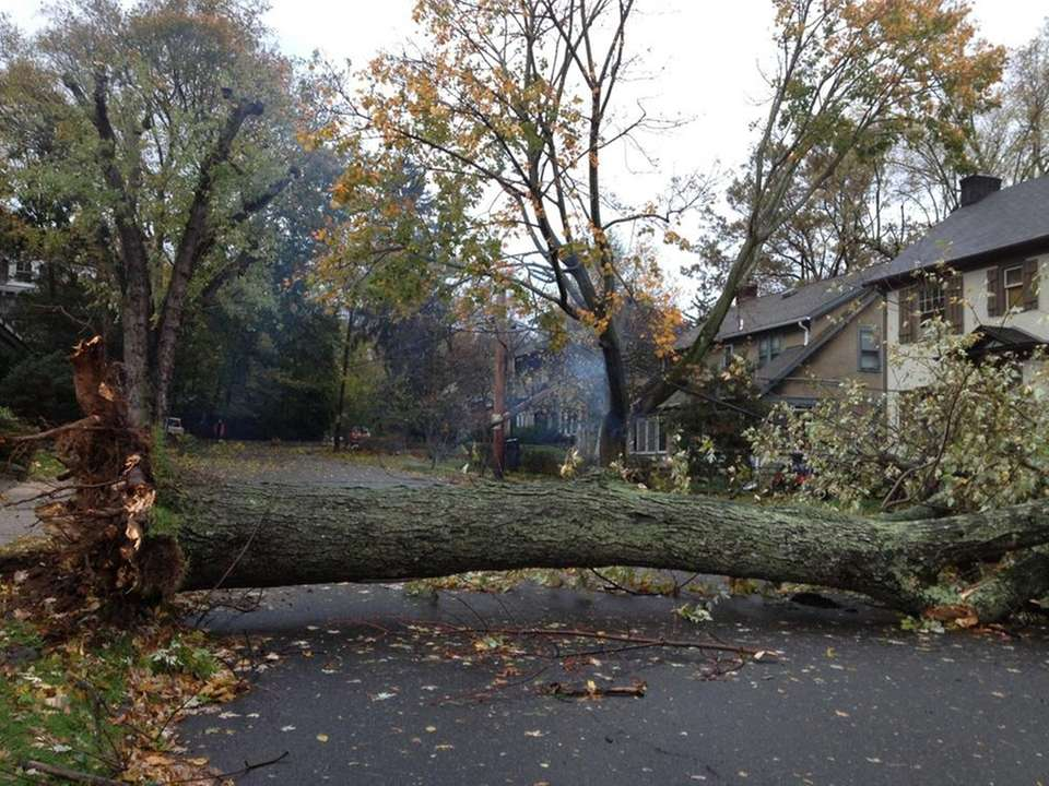 A fallen tree in Hastings was downed by