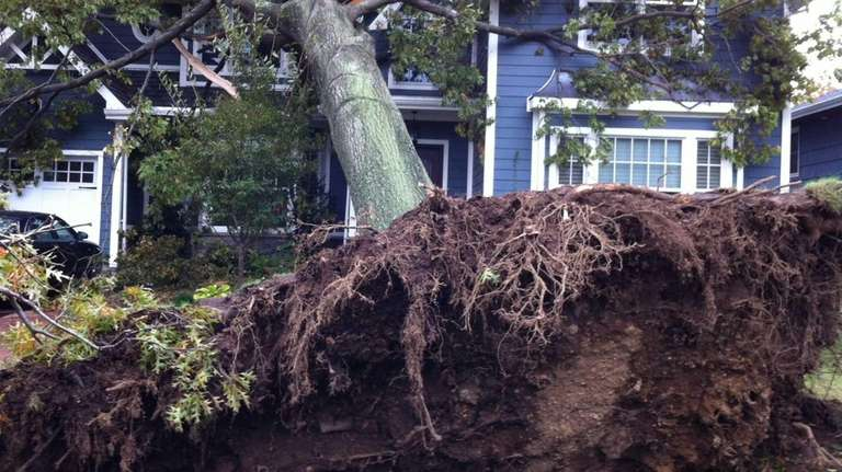 A tree toppled by storm winds lies across