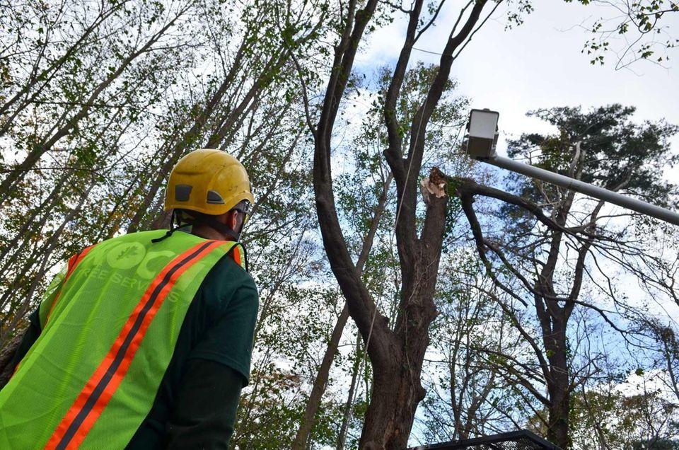 Jeremy Koch, of Koch Tree Service, works with
