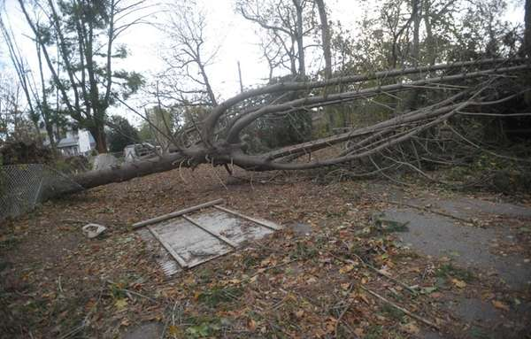Downed trees lay across Laurelton Drive in Mastic