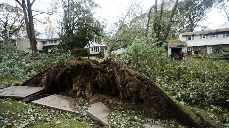 One of the five large trees that fell