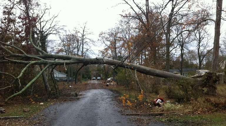 Superstorm Sandy knocked down a tree on Woodland