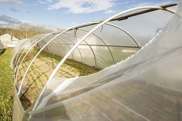 Plastic row covers at Peconic's Sang Lee Farms