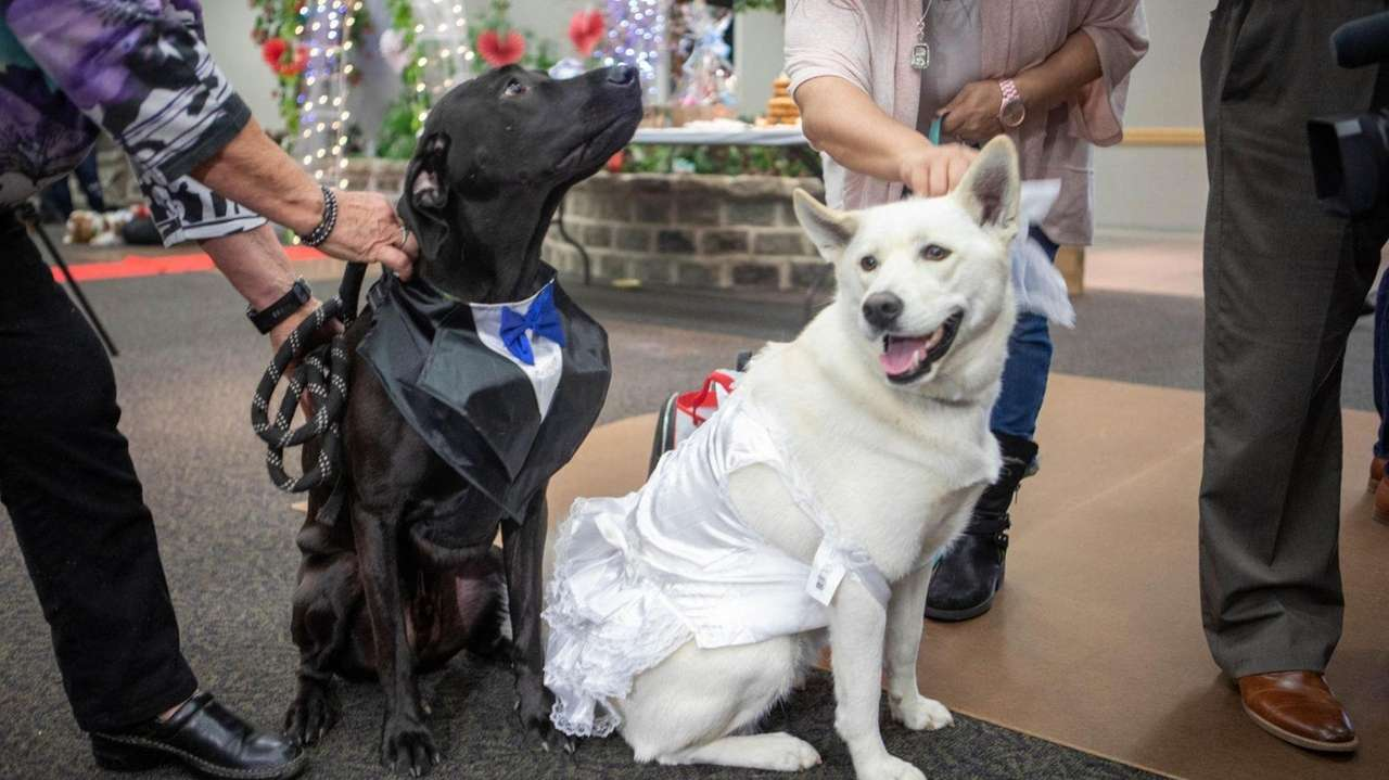 Puppy love was celebrated Friday in Hauppauge, where